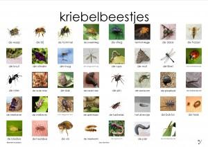 kriebelbeestjes plaat