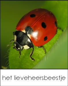 bingo kaartjes kriebelbeestjes